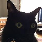 ブラックCAT