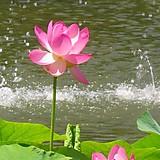 pinkpeach348