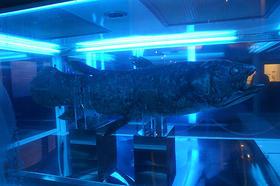 夏休みは赤坂サカスの水族館へ!