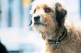 愛らしい子犬キャラがスクリーンに帰ってくる「ベンジー」