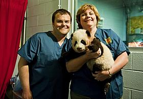 赤ちゃんジャイアントパンダに対面したジャック・ブラック「カンフー・パンダ」