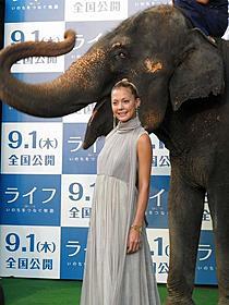ゾウのランディくんと一緒に歩いて大興奮の土屋アンナ「ライフ いのちをつなぐ物語」