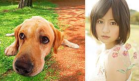 まさおくんと主題歌を担当する前田敦子「LOVE まさお君が行く!」