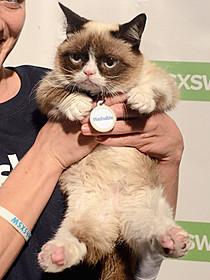 ネットを席巻しているスーパースター猫「ガーフィールド」