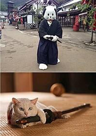 ニャンまげが「猫侍」宣伝部長に「猫侍」