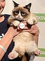 ネットで大人気の猫「グランピーキャット」主演のクリスマス映画製作へ