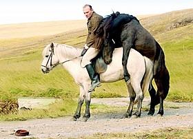 とびきりユニークな、馬と人の物語「馬々と人間たち」