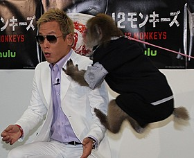 サルのりくくんの飛び蹴りをくらうじゅんいちダビッドソン「12モンキーズ」