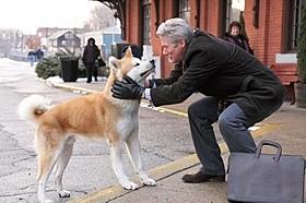 「HACHI 約束の犬」の一場面「ホワイト・ドッグ」