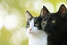 「猫なんかよんでもこない。」主演猫のチンとクロ「猫なんかよんでもこない。」