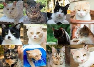 """シナモン(中段左から2番目)ら""""猫スター""""が登場「ねこあつめの家」"""