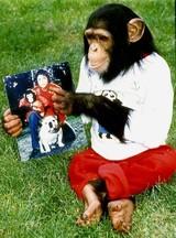 マイケル・ジャクソンのチンパンジーを題材にしたアニメ「バブルス」をNetflix獲得