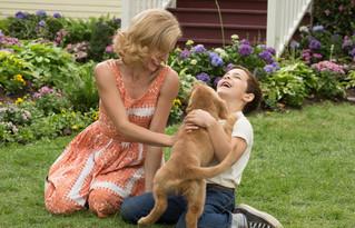 犬ベイリーのピュアな愛情が涙を誘う仕上がり「僕のワンダフル・ライフ」