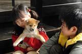 マリと子犬の物語