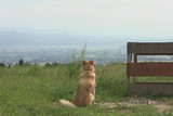 犬と猫と人間と2 動物たちの大震災