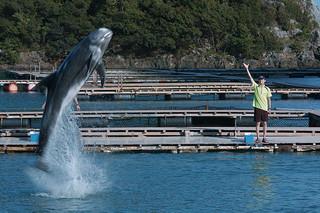 ボクはボク、クジラはクジラで、泳いでいる。
