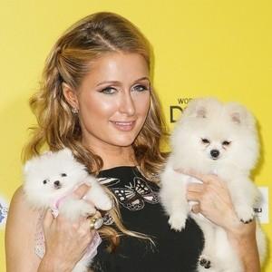 パリス・ヒルトン&愛犬プリンセス・パリス・Jr.(左)と愛犬プリンス・ヒルトン(ティー カップ・ポメラニアンと普通のポメラニアン)