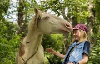 「ウェンディと白い馬」鑑賞券