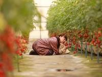 ラブストーリーズ 「農家の嫁 あなたに逢いたくて」