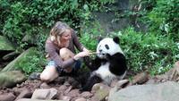 ファインディング ベイビー パンダ くしゃみパンダを探せ