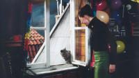 ネコのミヌース