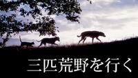 三匹荒野を行く