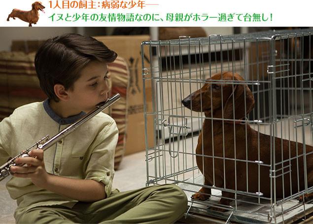 両親の心配をよそに、病弱なレミはと子犬はどんどん仲良くなっていくが……