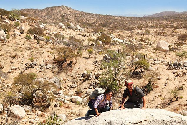 アメリカへの不法入国を試みたメキシコ人たちが、荒野で突然狙撃者に狙われてしまう