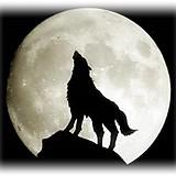 ムービー狼