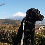 Akira Tsuchihashi
