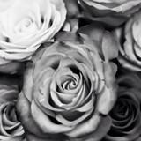 薔薇リーマン