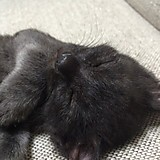 okami_pomptei