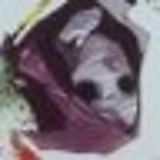 LIBRA00028