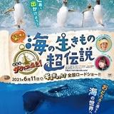 タイトルは「驚き!海の生きもの超伝説 劇場版ダーウィンが来た!」