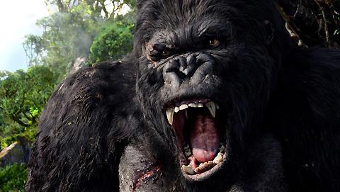 新しい「キング・コング」映画が急浮上。ドクロ島での怪獣大決戦?