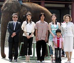 象が増上寺に出現。柳楽クンの「星になった少年」