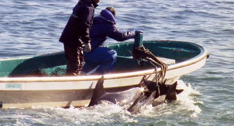 イルカ漁の映画「ザ・コーヴ」日本公開が決定!漁師の顔は一部カットか?