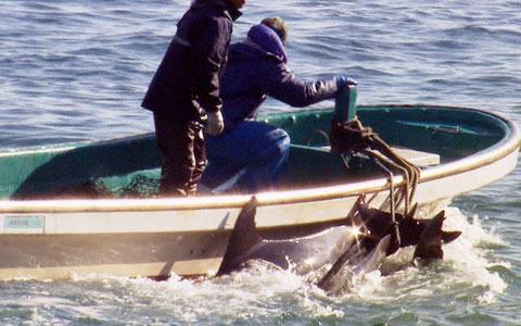 反イルカ漁映画「ザ・コーヴ」苦難乗り越え全国6スクリーンで公開
