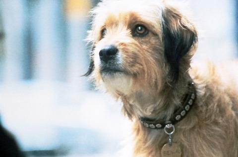 懐かしの犬映画「ベンジー」が復活