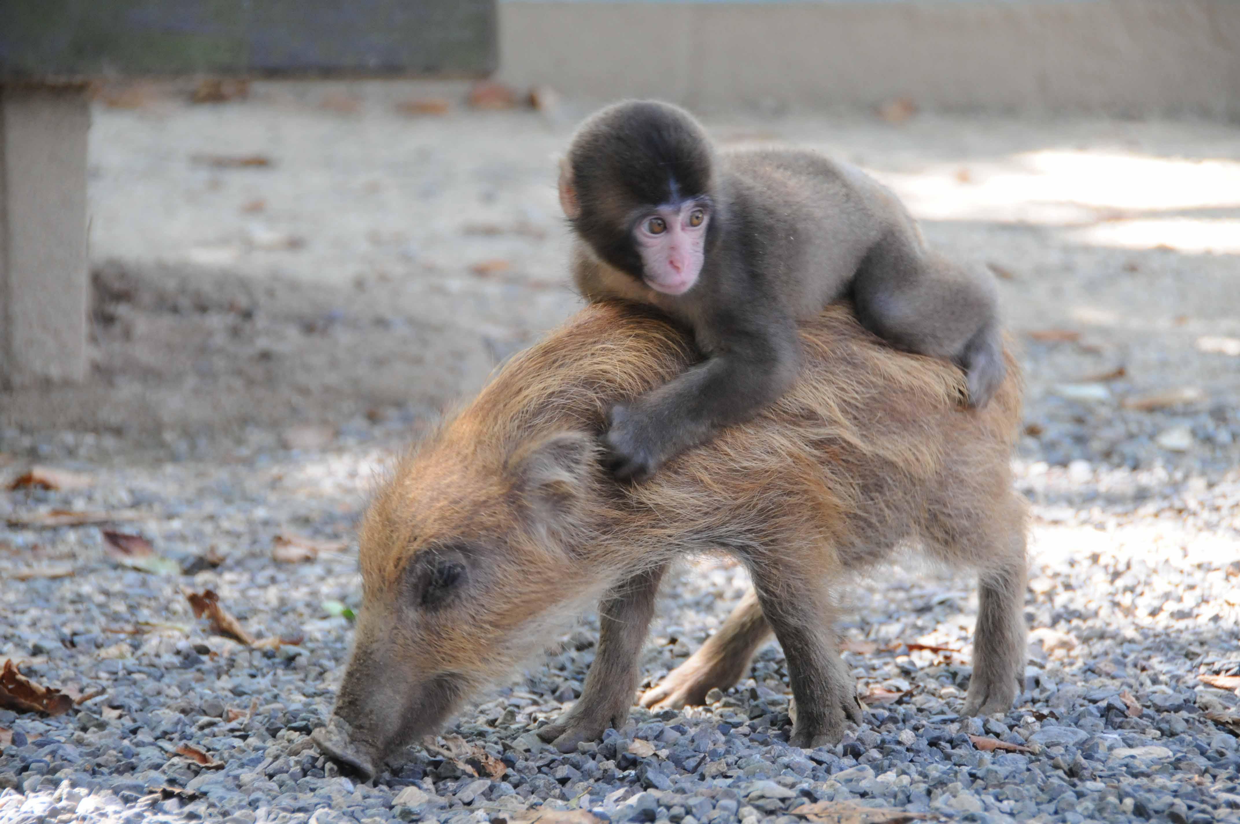 ウリ坊と子猿のみわちゃん「リアル鬼ごっこ」に強制参加!