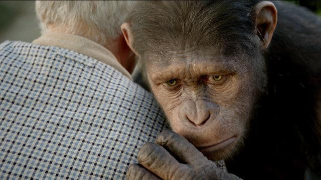 「猿の惑星」最新作 CGのサル、動物愛護団体からお墨付きもらう