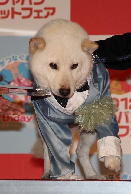 松本秀樹、第1回ペットアワード受賞は「まさお、だいすけのおかげ」 - 画像8