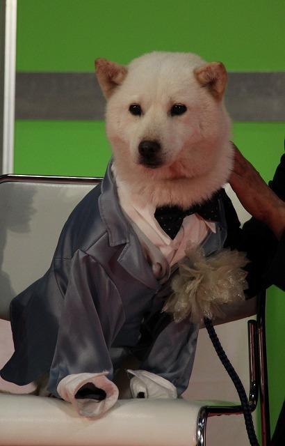 松本秀樹、第1回ペットアワード受賞は「まさお、だいすけのおかげ」 - 画像9