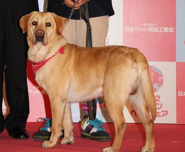 松本秀樹、第1回ペットアワード受賞は「まさお、だいすけのおかげ」 - 画像10