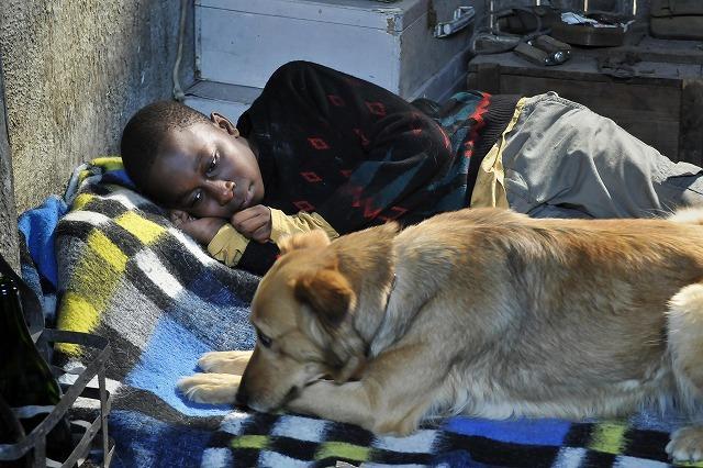 """アギーに続く、次の注目犬はカウリスマキ監督の愛犬""""ライカ"""""""