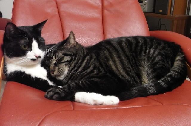 史上初のネコ動画映画祭がアメリカで開催へ