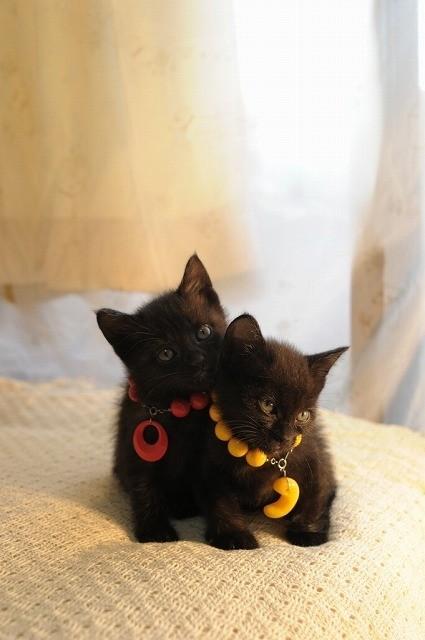ネコが可愛いだけじゃない! 「くろねこルーシー」特報公開 - 画像2