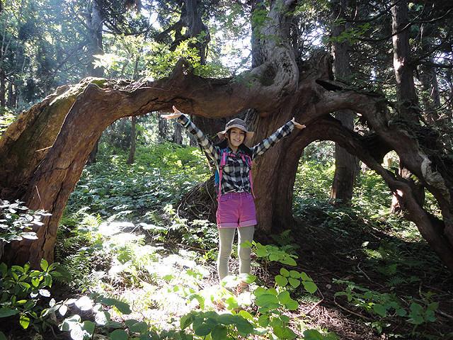 川島海荷、初の自然ドキュメンタリーで佐渡の天然杉をレポート
