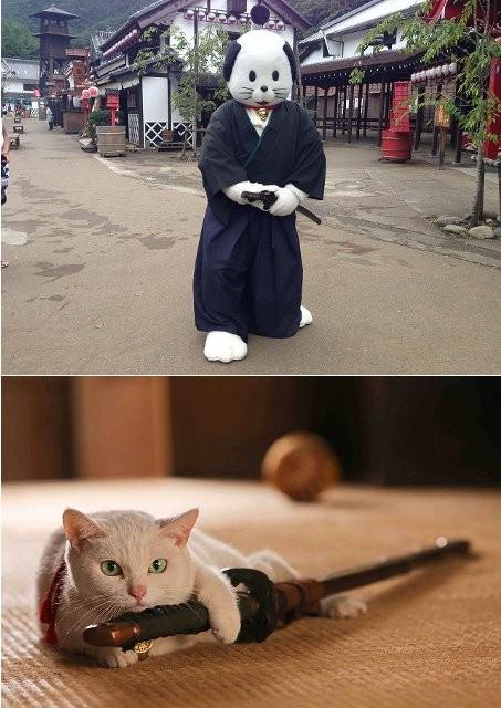 """元祖ゆるキャラ""""ニャンまげ""""が「猫侍」宣伝部長に就任!"""