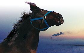 東日本大震災で生き延びた馬を追ったドキュメンタリー「祭の馬」